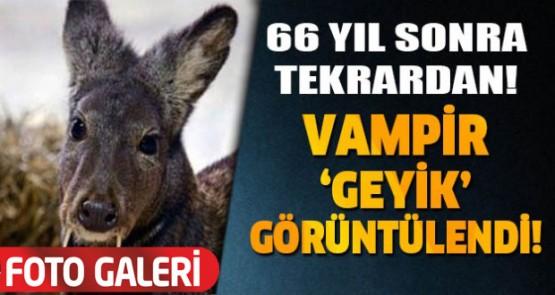 VAMPİR GEYİK 60 YIL SONRA GÖRÜNTÜLENDİ