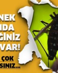 Sivrisinek Hakkında Bilmediğiniz Çok Şey Var! Çok Ama Çok Şaşıracaksınız...