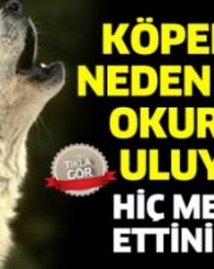 Hiç merak ettiniz mi? Köpekler neden ezan okurken uluyor? İşte cevabı...