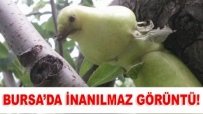 Bursa'da görenleri şaşkına çeviren fotoğraf