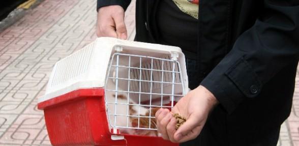 15 gün aç kalan kedi operasyonla kurtarıldı