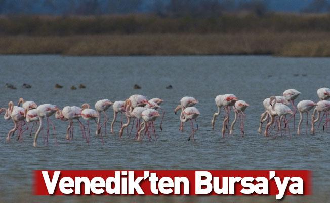 Venedik'ten Bursa'ya