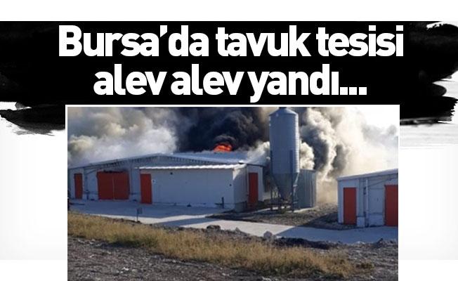 Bursa'da tavuk tesisi alev alev yandı...