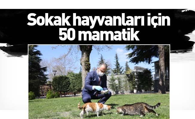 Bursa'da sokak hayvanları için 50 mamatik