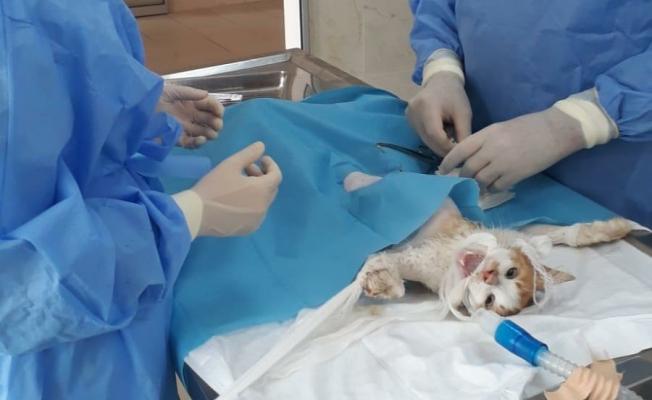 Yaralı kedi ameliyat edildi