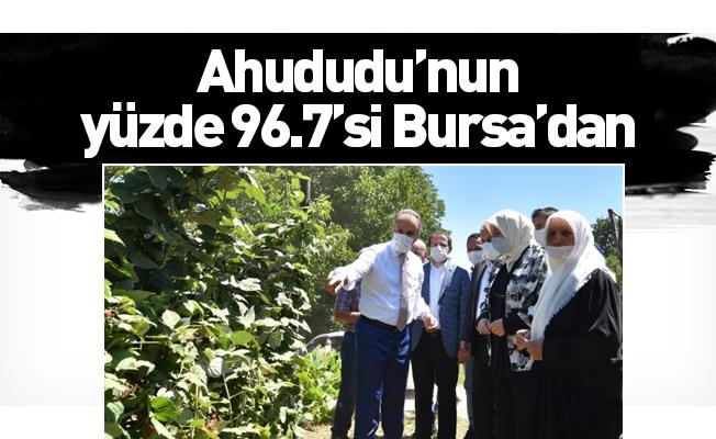 Ahududu'nun yüzde 96.7'si Bursa'dan