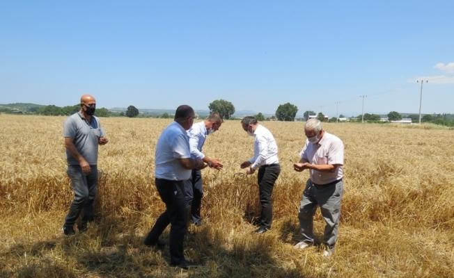 Mudanya'da hububat hasadı başladı