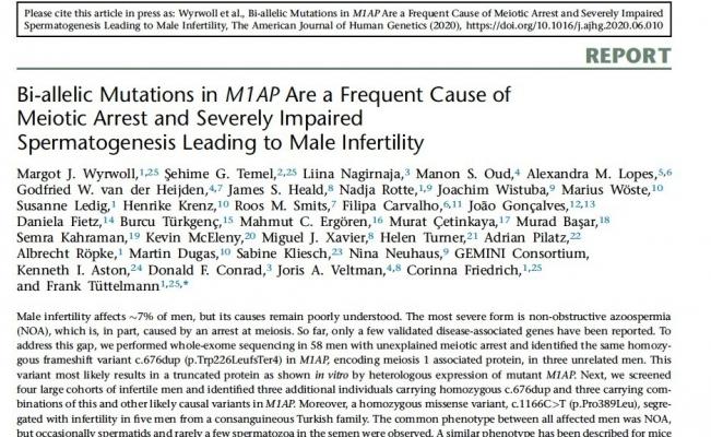 Erkek kısırlığı ile ilişkili yeni bir gen tanımlandı