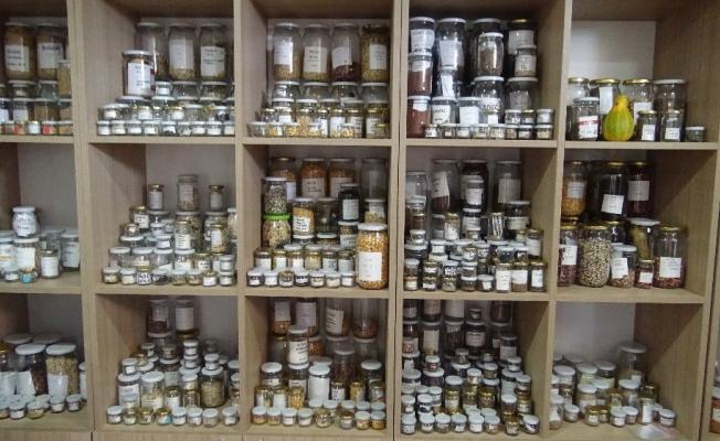 (Özel) Bu kütüphanede ata tohumu üretiliyor