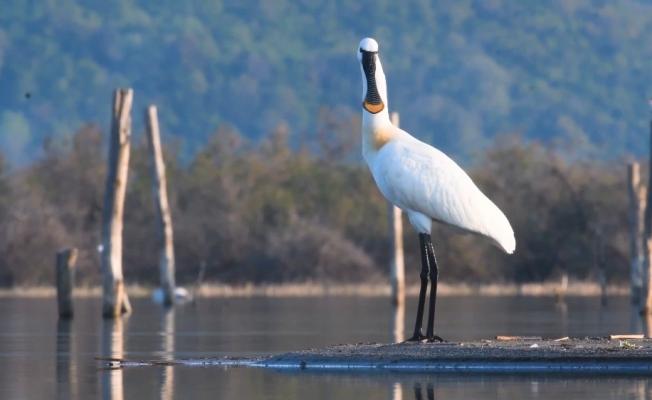 100'e yakın kuş türünü böyle görüntüledi, çektiklerini klip haline getirdi