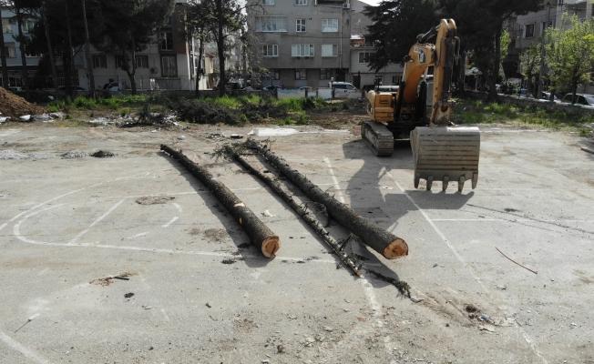 (Özel) Okul bahçesindeki ağaç katliamını mahalleli önledi