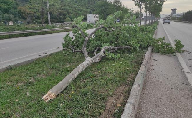 Aydınlatma direği ve ağacı yerinden sökerek takla attı: 1 yaralı