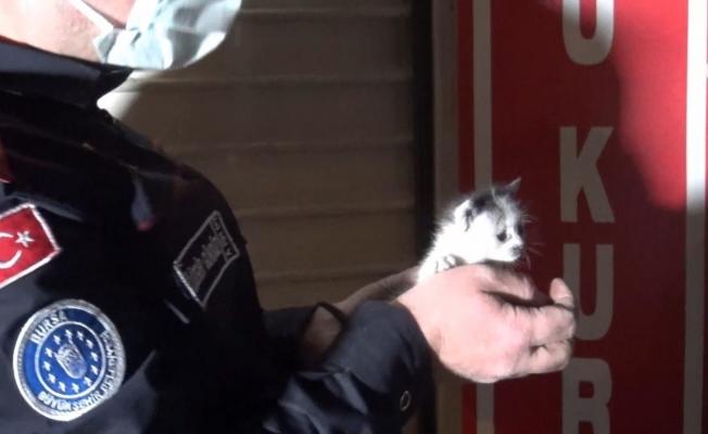 Bursa'da yavru kedileri kurtarmak için seferber oldular