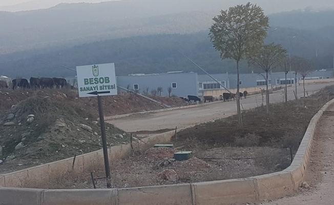 Bursa'nın hüsran projesi...