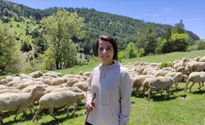 (Özel) Koyunlarını otlatarak Avrupa Şampiyonası'na hazırlanıyor