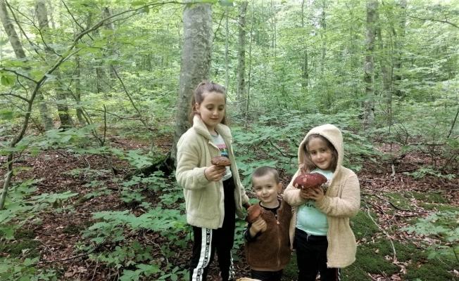 Ormandaki en güzel mantarı bulmak bu çocukların işi