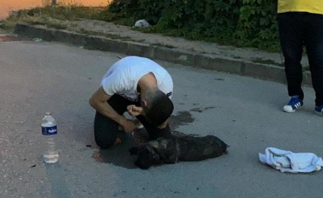 Yaralı köpeğinin başında gözyaşı döktü