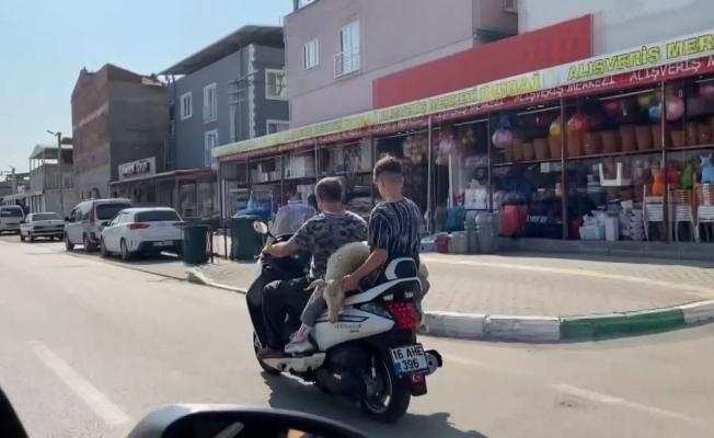 (Özel) Bursa'da sıra dışı hayvan taşıma tekniği kameralara böyle yansıdı