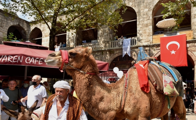 6 asırlık handa develi koza mezadı
