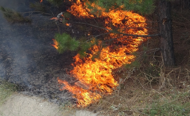 Bursa'da ağaçlık alanda çıkan yangın korkuttu