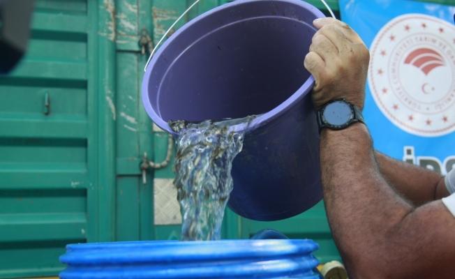 Bursa'da göl ve göletlere 1 milyon 756 bin adet yavru sazan balığı bırakıldı