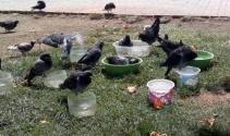 Yüzlerce Kuş Telef Olmakta Kurtuldu