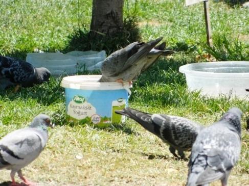 Sıcaklardan Etkilenen Kuşlara Vatandaş Desteği