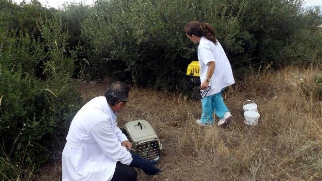 Annelerini Kazada Kaybeden Kirpiler Ormanla…