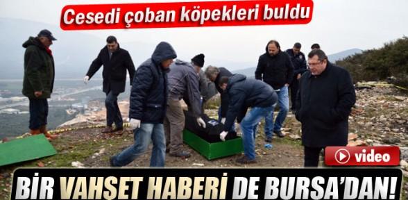 Bir vahşet haberi de Bursa'dan