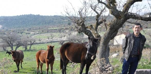 Bunlar Arap Atı Değil Ama Traktörlerden Daha Pahalı