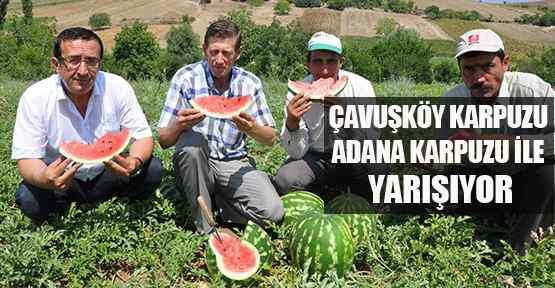 Çavuşköy Karpuzu Adana Karpuzu İle Yarışıyor