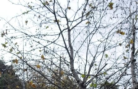 Çevreciler Kesilmelerine Engel Olamadı