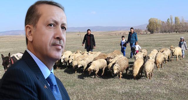 Çiftçi Ailelere Verilecek 300 Koyun+Maaş Uygulamasının Detaylarını Erdoğan Açıklayacak