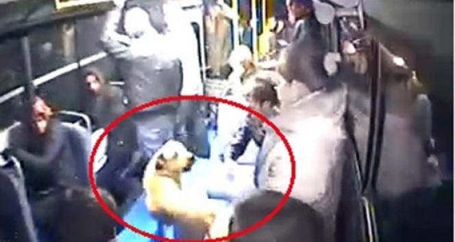 Halk otobüsüne binen köpeği gören vatandaşlar büyük panik yaşadı