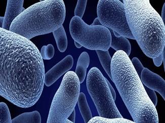Hastalıklarınızın Sebebi Bakteri Mikrobiyotası Olabilir