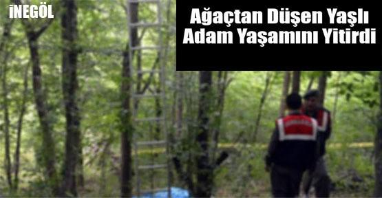 İnegöl'de  ağaçtan düşen yaşlı adam hayatını kaybetti