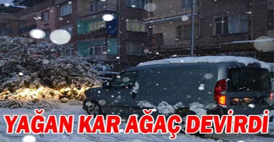 İnegöl'de  yağan kar ağaç devirdi