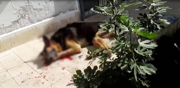 Köpeğini Işkenceyle öldürdü