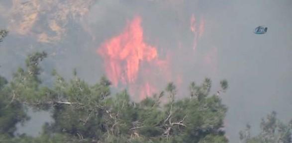 Piknik ateşi ormanlık alanı yaktı