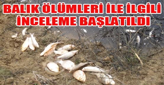 İnegöl'deki Balık Ölümleri İle İlgili İnceleme Başlatıldı