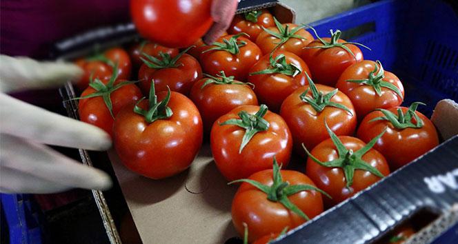 Rusya Türk domatesine olan yasağı tamamen kaldırıyor