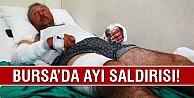 Bursa#039;da ayı saldırısı!