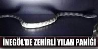 İnegöl#039;de zehirli yılan paniği