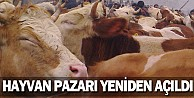 Hayvan pazarı yeniden açıldı