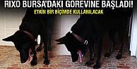 Bursa'ya yeni dedektör köpek