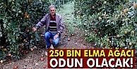 250 bin elma ağacı odun olacak!