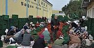 Kulacadan Avrupaya salça ihracatı sürüyor