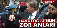 Ahmet Davutoğlunun papağan ile zor anları