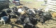 Zehirli ot yiyen 27 keçi telef oldu