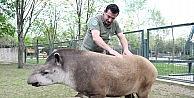 (Özel Haber) Masaj salonu değil hayvanat bahçesi